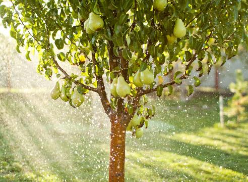 Как и с какой целью нужно поливать деревья осенью