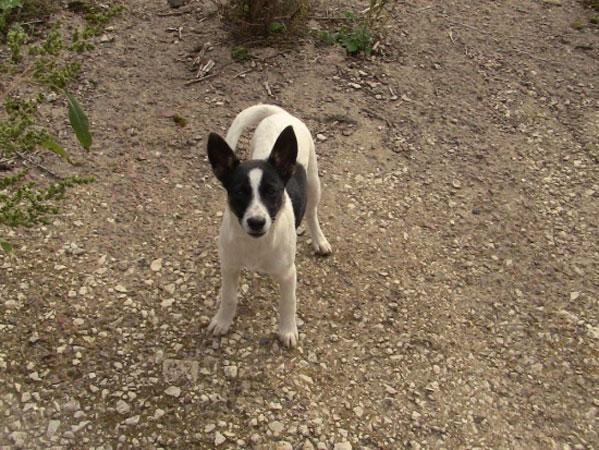 Самоотверженная собака по кличке Айка спасла человека!