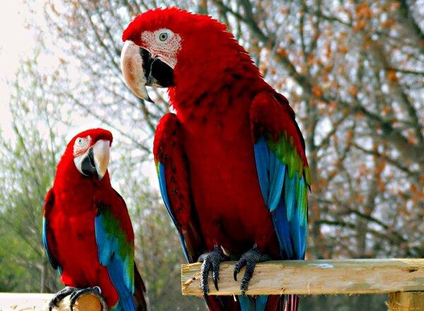 …Попугай говорит: –Ой, замолкни уже, и копай картошку!