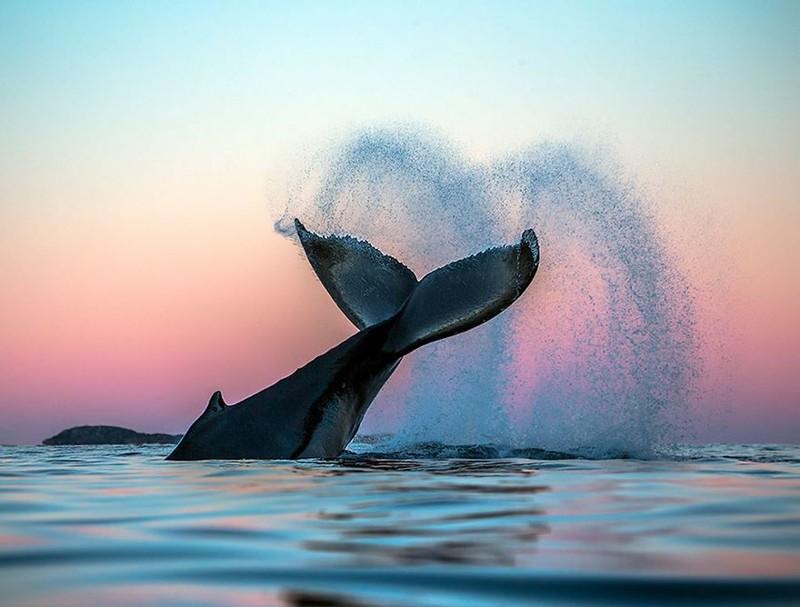 Профессор-биолог делает невероятные снимки гренландских китов