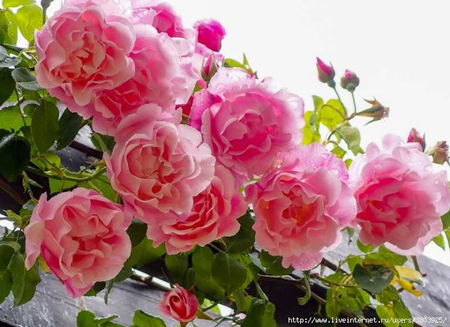 Как продлить цветение цветов…