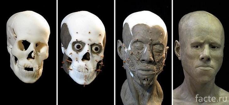 Воссоздано лицо человека, жившего 9 тысяч лет назад