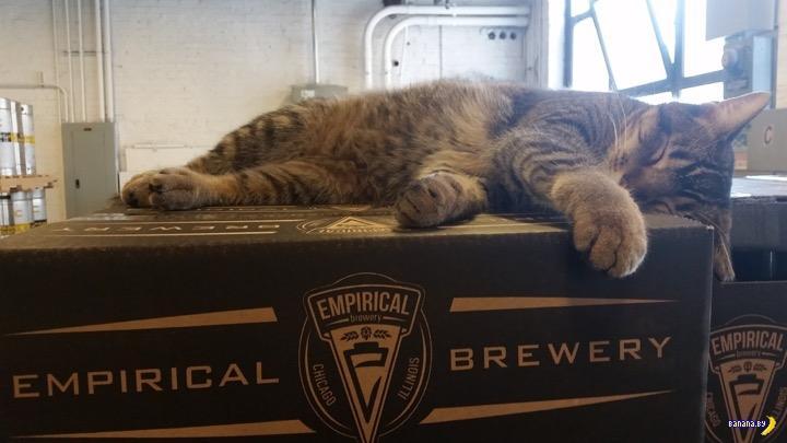 Пивоварня в Чикаго наняла профессиональных убийц —  достали крысы и мыши...