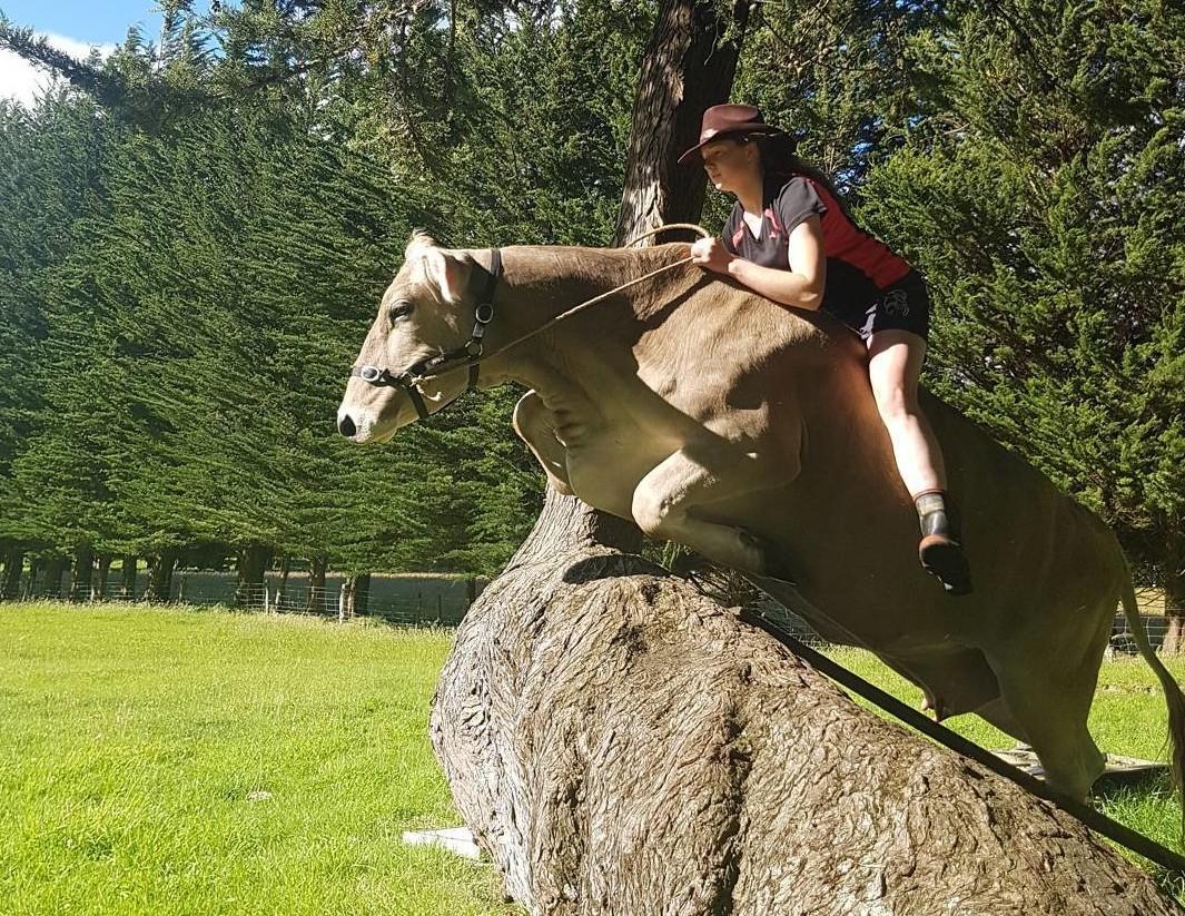 Эта корова из Новой Зеландии думает, что она — лошадь. А почему бы и нет!