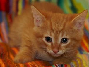 """""""Я – кот с глазами в цвет янтарных бусин..."""" :))"""