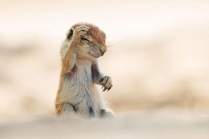 Фото диких животных, которые заставят вас смеяться до упаду