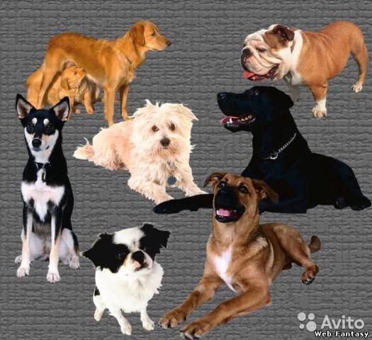 10 песен о собаках