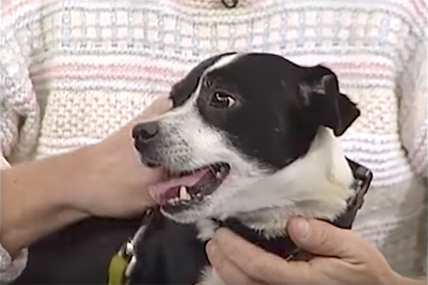 Семья закопала мертвого пса, но через 14 часов он снова стоял у них под дверью