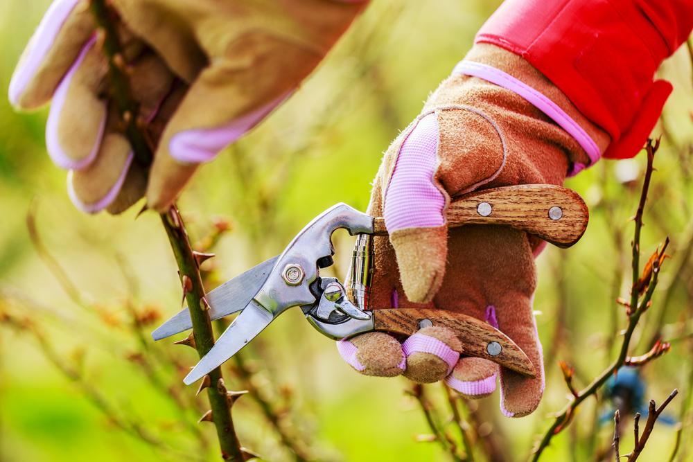 Весенние работы в саду: с чего начать?