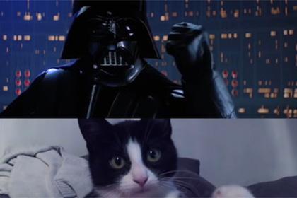 Коты спародировали сцену «Люк, я твой отец»