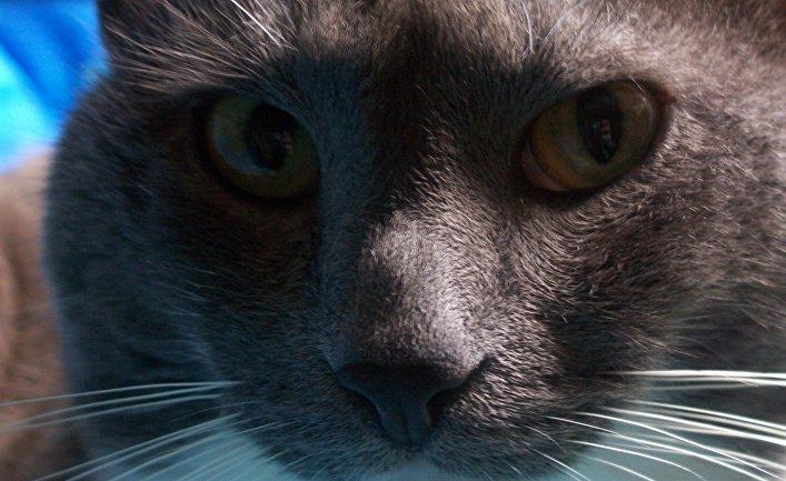 Кошки — домашние или дикие животные? (Slate.fr, Франция)