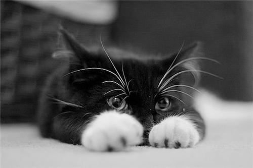 тут всё про котов с фотками)))