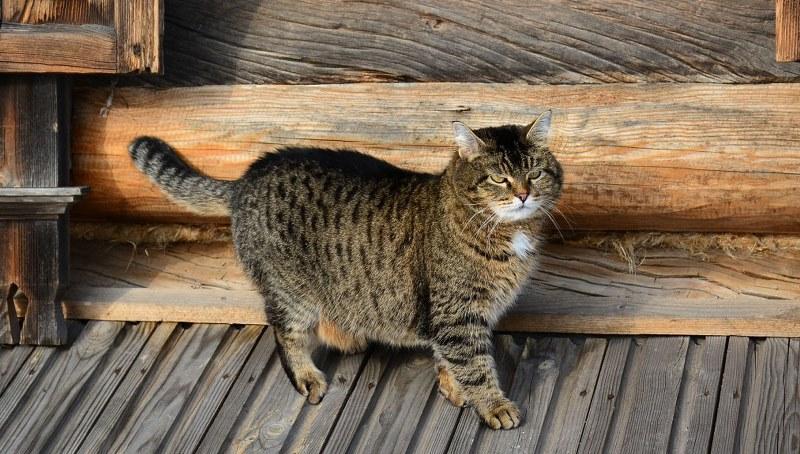 Дух отомстил за убитого кота