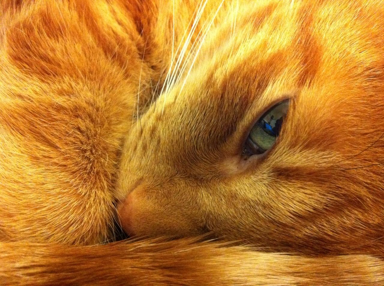 Кошка Варька