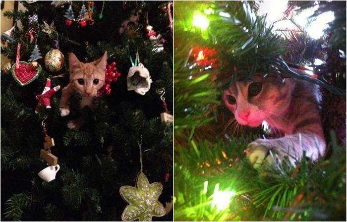 Вскоре в наших домах...  Коты и новогодние ёлки.