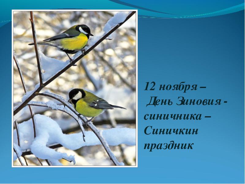 12 ноября - Синичкин день.
