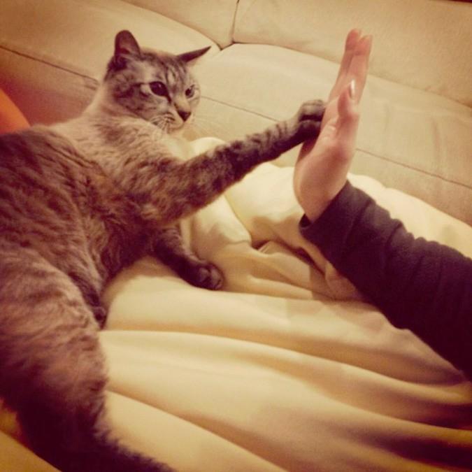 16 нелепых и смешных вещей, которые делают все кошачьи владельцы