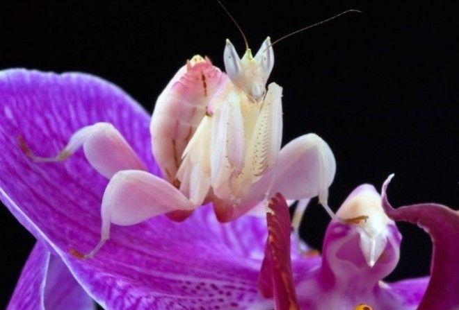 Сверхспособности насекомых