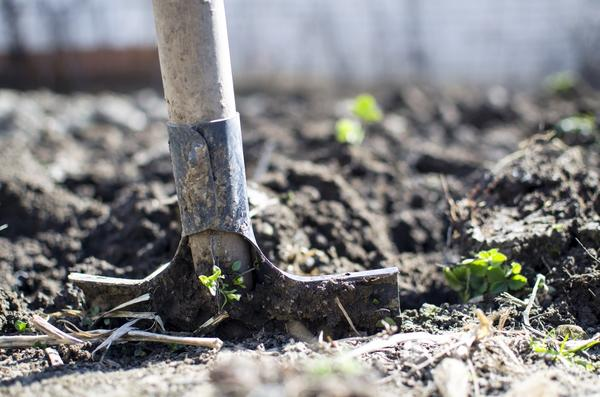 Ни в коем случае не копайте землю!