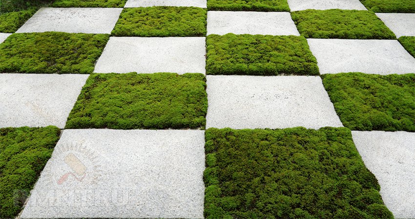 Шахматный дизайн газона