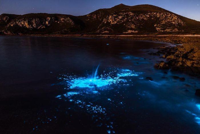 Биолюминесцентные морские водоросли у берегов Тасмании