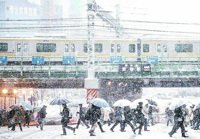 Согласитесь, это очень весело, когда они закрываются от снега зонтиками :)