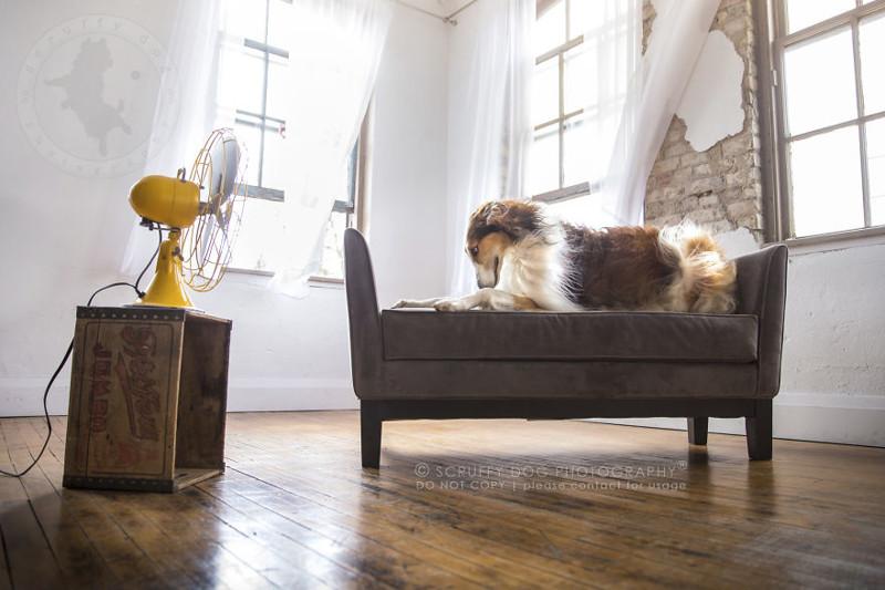 Вентиляторы стали необычным реквизитом для съёмки собак