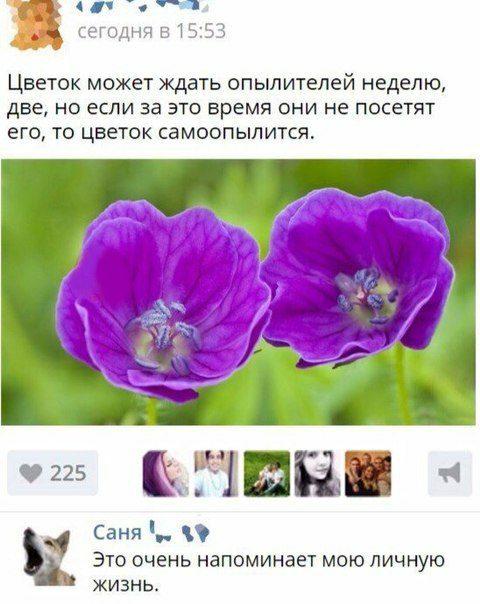 Соц.сети жгут!!!  Фееричные комментарии народных приколистов. Заходит поражать!