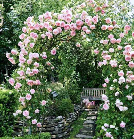 Сказочные садовые арки с плетистой розой: 35 идей + советы
