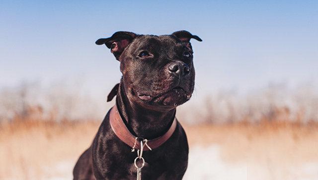 Генетики нашли необычное объяснение дружелюбию собак