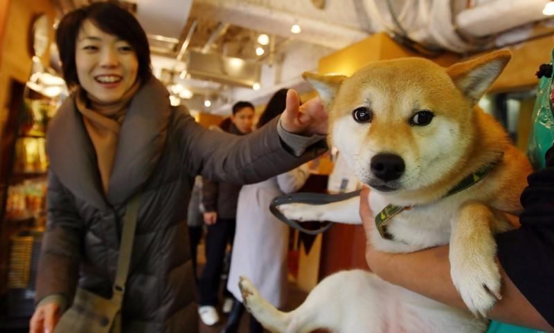 Кошки и собаки в Японии установили рекорд по продолжительности жизни