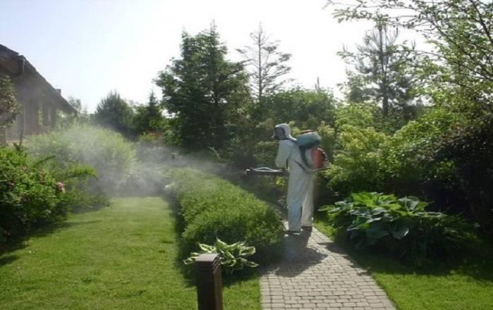 Просроченные лекарства для сада-огорода