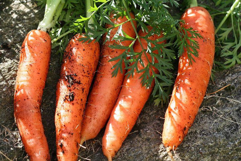 Почему морковь оранжевая? Интересные факты о моркови