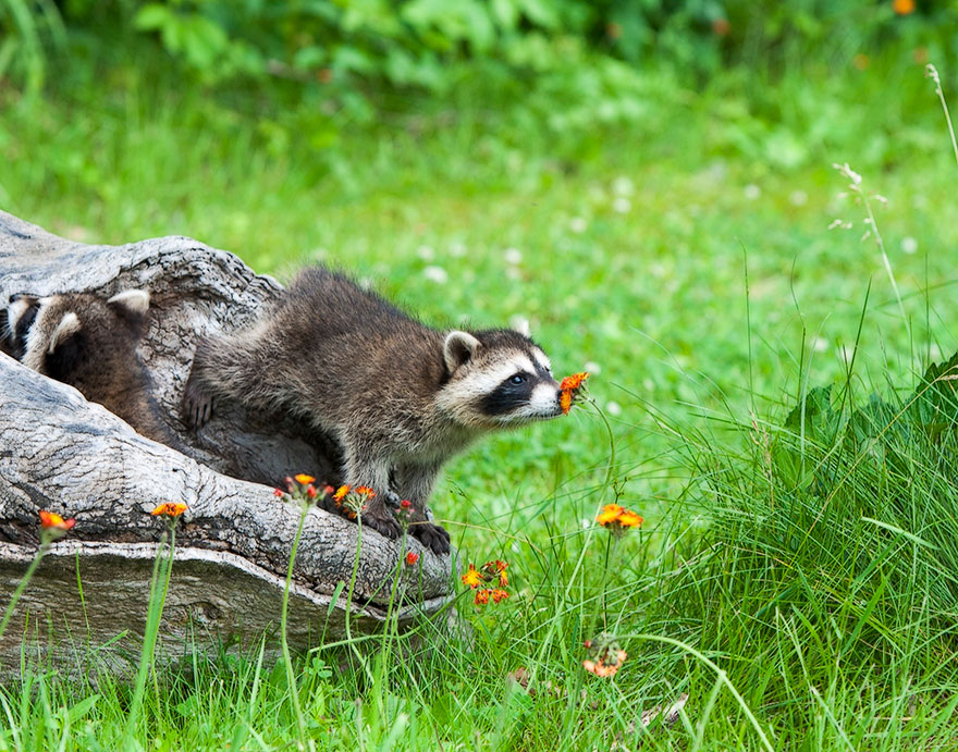 15 животных, которые безумно соскучились по весне