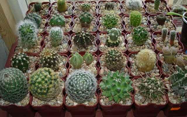 plants1216-10.jpg