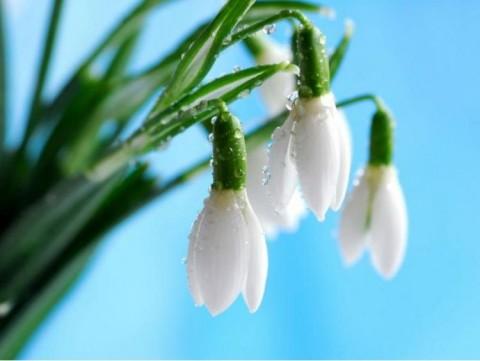 Поздравляем мартовских именинников с днём рождения!