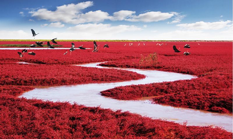 Красный пляж Паньцзинь, Китай красивые места, красота, невероятные места, фото