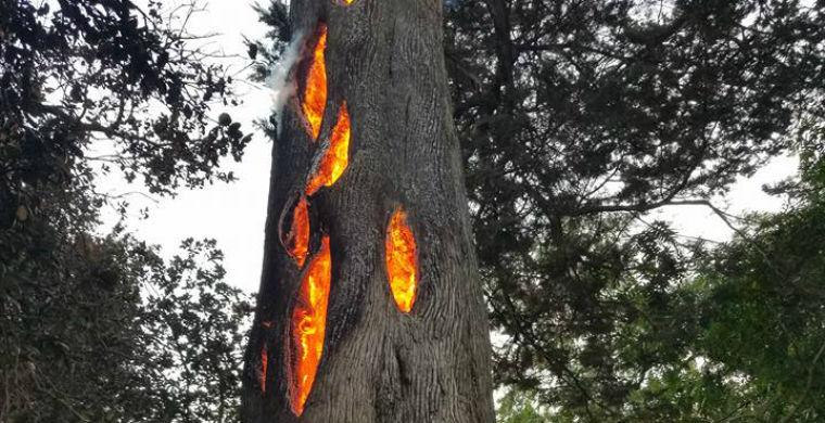 В США замечено дерево, горящее изнутри