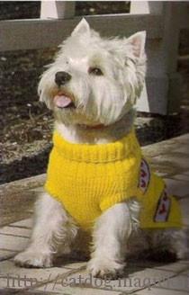 Красивый вязаный жилет для собаки цвета солнца