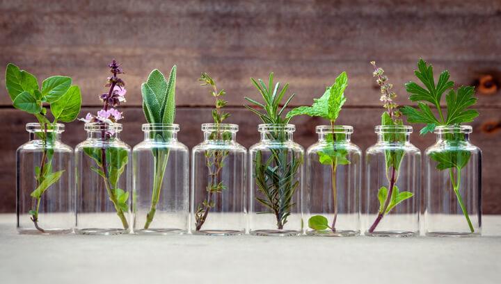Эти травы вы можете вырастить в стакане с водой круглый год
