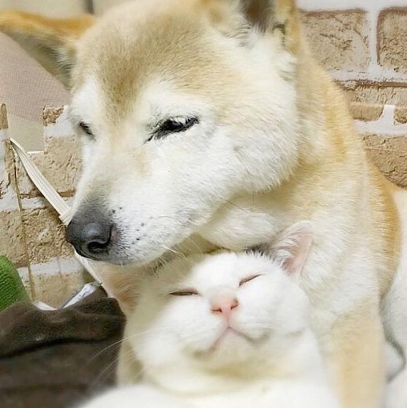 Вот она - настоящая дружба! Кишки+собаки
