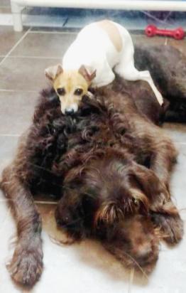Неразлучники — пережив предательство и потеряв дом, эти собаки нашли поддержку друг у друга
