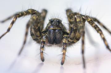 Беспокоят пауки в квартире? Мы знаем что делать