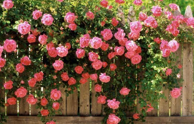 Каким должен быть красивый сад