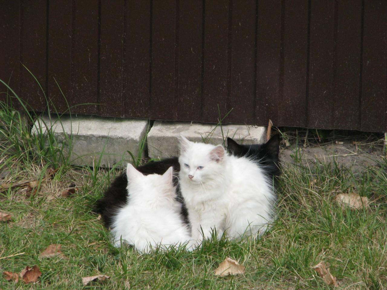 Братья наши меньшие: нужна кошка человеку? зачем