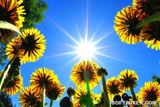 Растения – предсказатели погоды