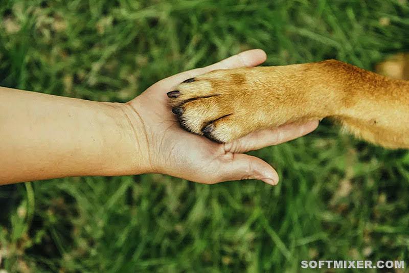 Малоизвестные факты о собаках