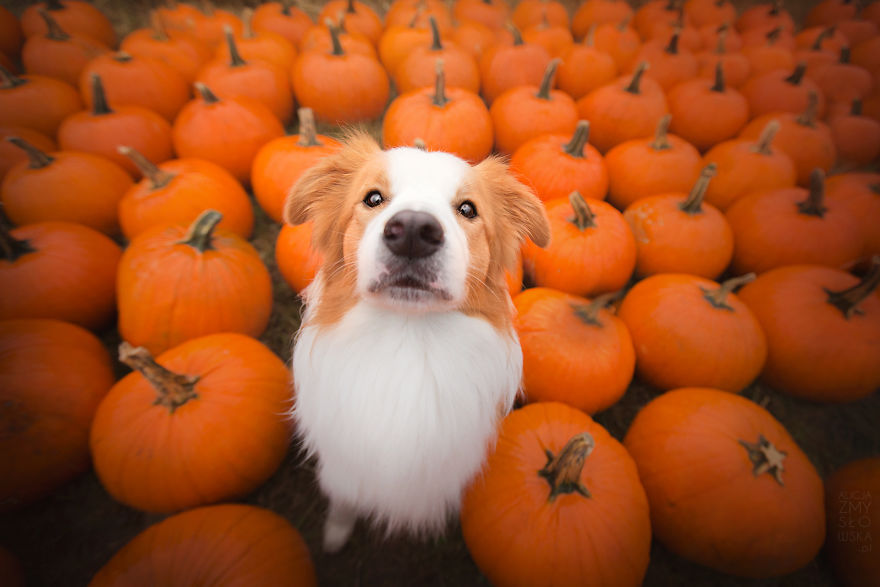 My Dogs And I Found A Place Full Of Pumpkins And Decided To Have Some Fun!