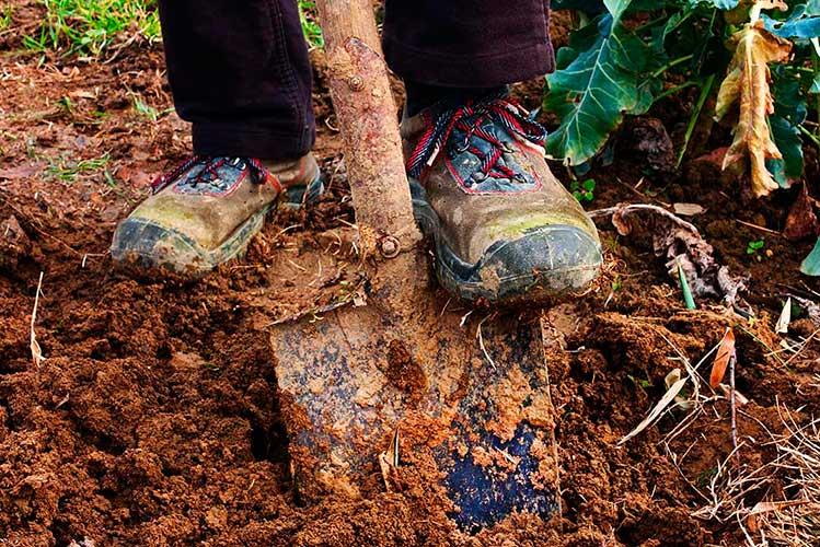 Как правильно копать в огороде: советы бывалых