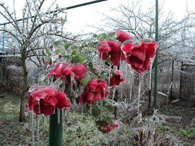 Приводим в порядок огород после настандартной зимы: советы Андрея Туманова